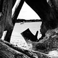 Drift Wood Window by Marti Green