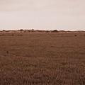 Dunes Of Danmark 3 by Jouko Lehto