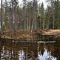 Haukkajoki Panorama 1 by Jouko Lehto