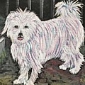 Maltese Terrier Mix In Living Color by Reb Frost