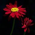 Red by Jouko Lehto
