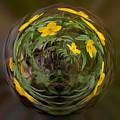 This Little Anemone Planet 2 by Jouko Lehto