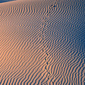 Tracks At First Light In Death Valley by Sandra Bronstein