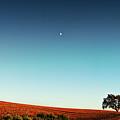 Vineyard Sky Panorama by Larry Gerbrandt
