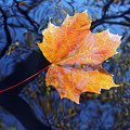 All About Autumn by Michal Boubin