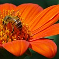 Bee-utiful by Debbie Karnes