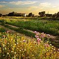 Countryside Landscape by Carlos Caetano
