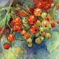 Currants Berries Painting by Svetlana Novikova