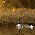 Evening By The Pond by Angel Ciesniarska