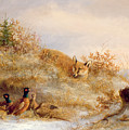 Fox And Pheasants In Winter by Anonymous