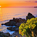 Giant Coreopsis Sunset by Greg Clure