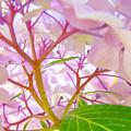 Hydrangeas Flowers Art Prints Hydrangea Art Giclee Baslee Troutman by Baslee Troutman