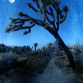Joshua Trees At Night by Jill Battaglia