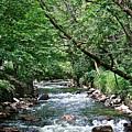 Minnehaha Creek by Susan Herber