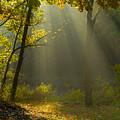 Mystic Morning by Neil Doren