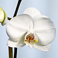 Orchid by John Ater