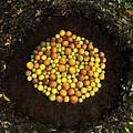 Organize Oranges by Lizzie  Johnson