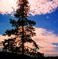 Pine Tree By Peck Lake 4 by Lyle Crump
