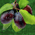 Plums by Manfred Lutzius