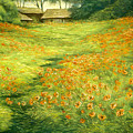 Poppies by Michael Scherer