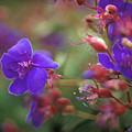 Purple Flowers by Jim And Emily Bush