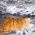 Reflections In Melting Snow by Neil Doren