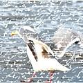 Seagull by Debra  Miller
