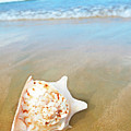 Seashell by MotHaiBaPhoto Prints
