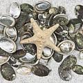 Seashells by Joana Kruse