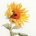 Sunflower by Deborah Ronglien