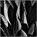 Sunlit Cactus by David Patterson
