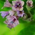 Tiny Purple Flower by Patrick  Short