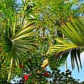 Tropical Plants by Zal Latzkovich