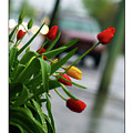 Tulips by William Jones