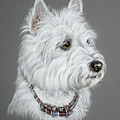 West Highland White Terrier  by Patricia Ivy