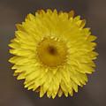 Yellow by Masami Iida