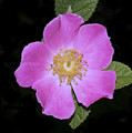 Flower by Masami Iida