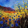 Blue Cornflowers by Pol Ledent