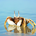 Crab On The Tropical Beach by MotHaiBaPhoto Prints