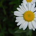 Flower by Adam Hernandez