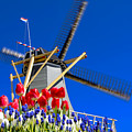 Holland by LS Photography