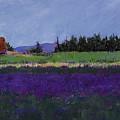 Lavender Farm by David Patterson