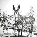 2 Mules by Terri Kilpatrick