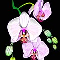 Orchids by William R Clegg