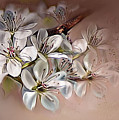 Oriental Pear Blossom by Bonnie Willis