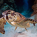 Cayman Islands by Larry Gohl