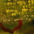 3 Birds by Keyon McGruder