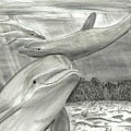 3 Dolphins Playing In Shallow Ocean Water by Joshua Hullender