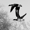 Flying Together by Kate  Leikin