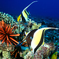 Hawaiian Reef Scene by Dave Fleetham - Printscapes